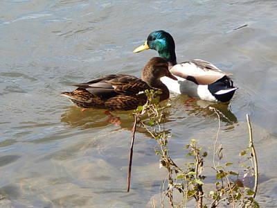Ducks Print by Jimmy Bullion