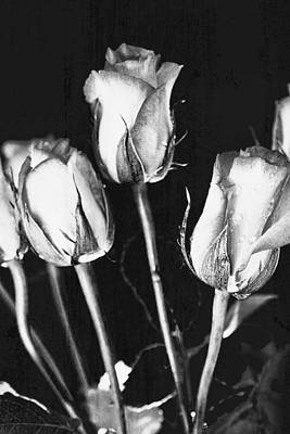 Background And Textures Photograph - Roses by Tom Gowanlock
