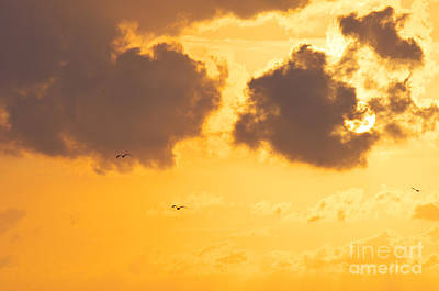 Sunset Print by Angela Doelling AD DESIGN Photo and PhotoArt