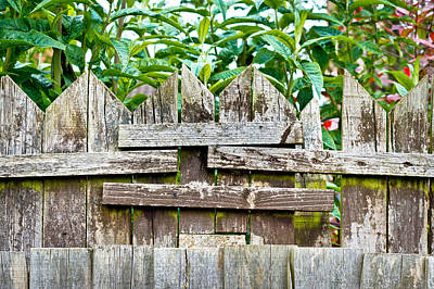 Wooden Fence Print by Tom Gowanlock