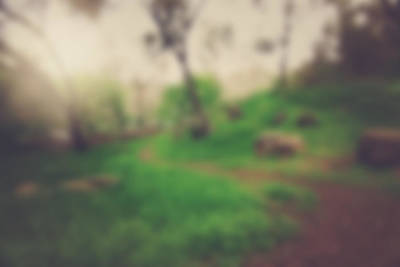 Tree Photograph - Blurred Nature Background With Instagram Style Filter by Brandon Bourdages