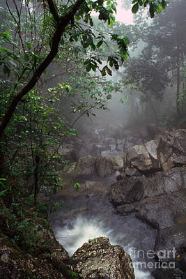Thomas R. Fletcher Photograph - Misty Rainforest El Yunque by Thomas R Fletcher