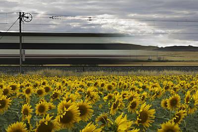 Railway Photograph - 78 Sunflowers by Kike Balenzategui