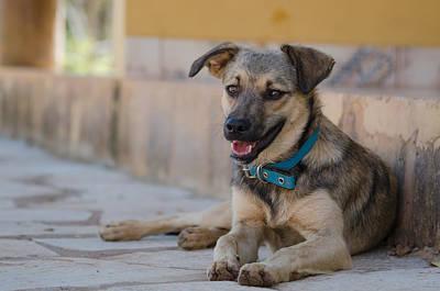 Animals Photograph - Dog Portrait by Daniel Precht