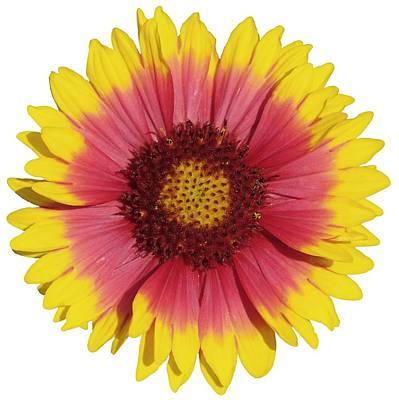 Poppy Photograph - Spring Flower by George Atsametakis