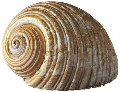Women Photograph - Sea Shell by George Atsametakis