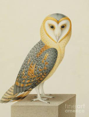 Owl Drawing - A Barn Owl by Nicolas Robert