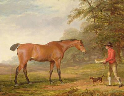 A Bay Horse Print by George Garrard