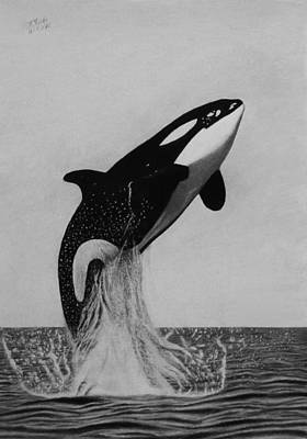 Orca Drawing - A Beautiful Breach by Vishvesh Tadsare