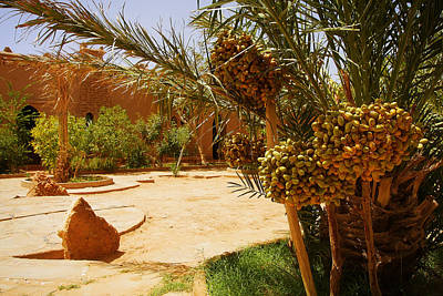 A Beautiful Moroccan Garden With Date Palm Trees With Riping Dat Print by Jozef Klopacka