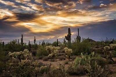 Rainy Day Photograph - A Beautiful Sonoran Desert Evening by Saija Lehtonen