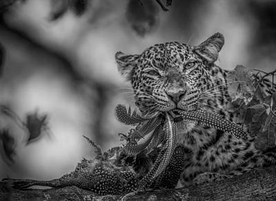 Leopards Photograph - A Big Feast by Jaco Marx