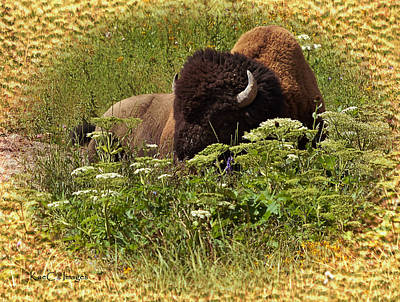 Bison Mixed Media - A Bison At Rest by Kae Cheatham