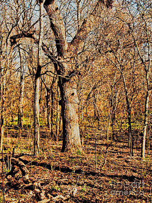 Bottomlands Photograph - A Bottomland Pecan by Gary Richards