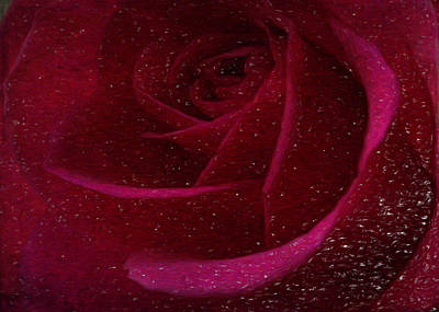 Digital Art - A Burgundy Rose In Snow by Sarah Vernon