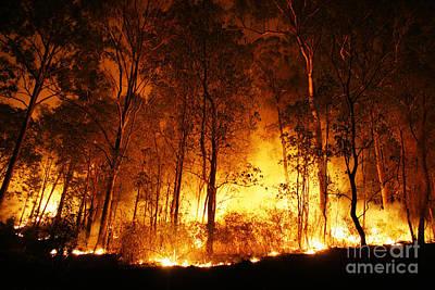 Burning Bush Digital Art - A Bushfire Burning Orange And Red At Night. by Caio Caldas
