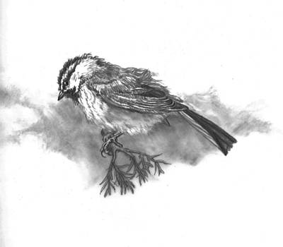 Chickadee Drawing - A Chickadee Named Didi by Dawn Senior-Trask