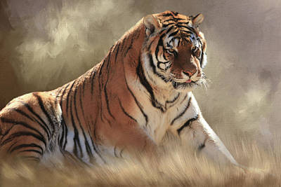 Tiger Photograph - A Coat Of Many Colors by Donna Kennedy