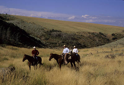 A Cowboy And Friends Herd Cattle Print by Taylor S. Kennedy