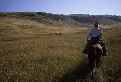 A Cowboy Herds Cattle On His Ranch Print by Taylor S. Kennedy