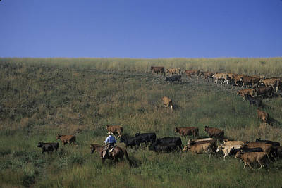 A Cowboy Rounds Up His Herd To Take Print by Taylor S. Kennedy