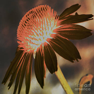 Abstracted Coneflowers Digital Art - A Crown Of Beauty by Beverly Guilliams