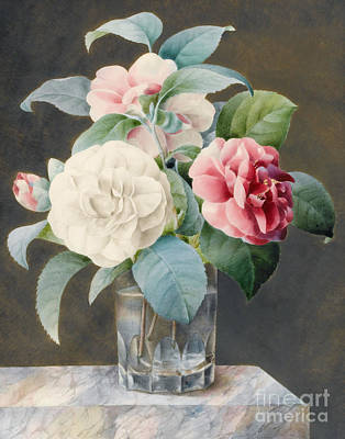A Cut Glass Vase Containing Camelias Print by Sarah Bray