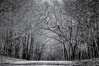 Black And White Photograph - A Darker Shade In The Forest by Liran Eisenberg