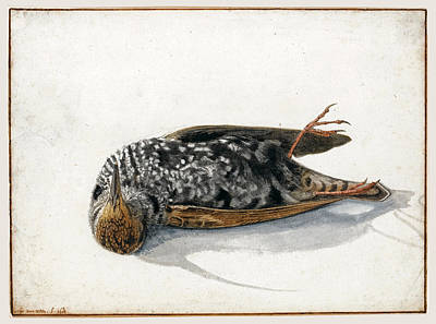 Starlings Drawing - A Dead Starling by Rochus van Veen