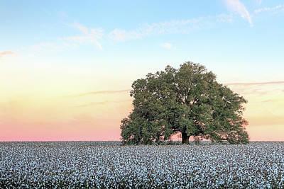 A Deeply Southern Sunrise Print by JC Findley