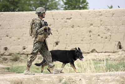 Panting Dog Photograph - A Dog Handler Of The U.s. Marine Corps by Stocktrek Images