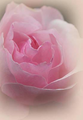 Pink Photograph - A Dove'sheart by The Art Of Marilyn Ridoutt-Greene