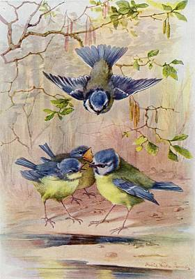 A Family Of Blue Tits. After A Print by Vintage Design Pics