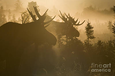 Golden Light Photograph - A Foggy Morning by Tim Grams