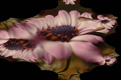 Abstract Digital Art Photograph - A Fractual Flower by Jeff Swan