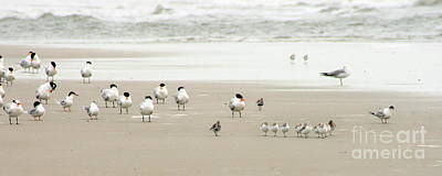 A Gaggle Of Seabirds Print by Angela Rath
