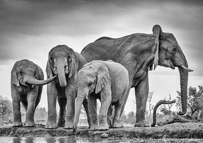 Mother Elephant Photograph - A Giant Unity by Jaco Marx