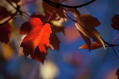 Of Autumn Photograph - A Glimpse Of Autumn by Karol Livote