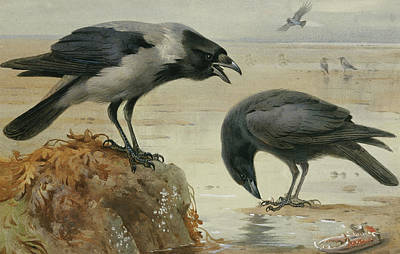 Crow Painting - A Hooded Crow And A Carrion Crow by Archibald Thorburn