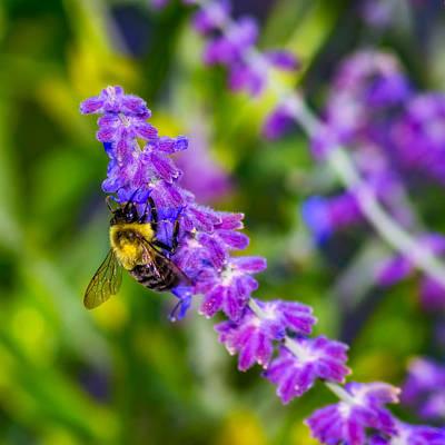 Garden Photograph - A Lavender World - Paint by Steve Harrington
