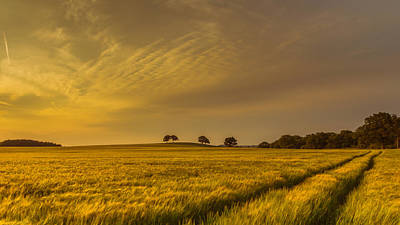 Cereal Photograph - A Line In The Grass by Chris Fletcher