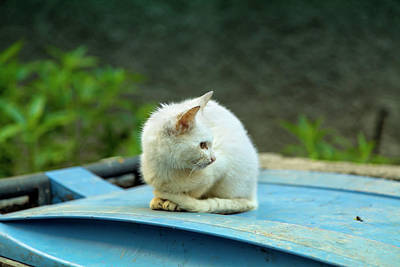 Photograph - A Little Cat Is Sitting On A Blue Dustbin by Regina Koch