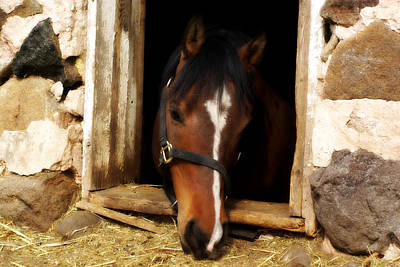 Horse Portrait Photograph - A Little Nibble by Linda Mishler