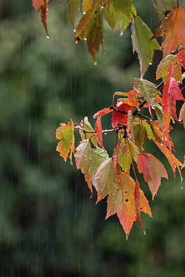 Must Art Photograph - A Little Rain Must Fall by Terry DeLuco