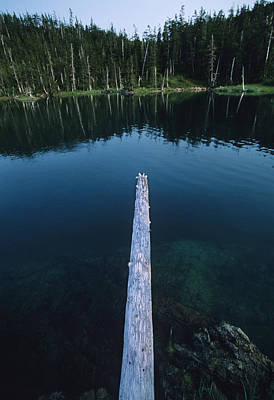 A Log Juts Out Over A Lake Print by Bill Hatcher