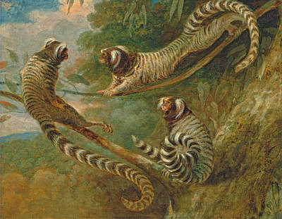 Painting - A Marmoset In Three Attitudes by George Garrard