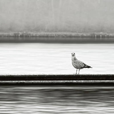 Sea Gull Photograph - A Moment In Time by Wim Lanclus