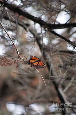 Concho Photograph - A Monarch For Granny by Alycia Christine