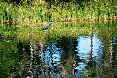 Heron Photograph - A Monet Moment by Adele Moscaritolo