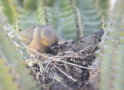 Dove Photograph - A Mother's Love  by Saija  Lehtonen